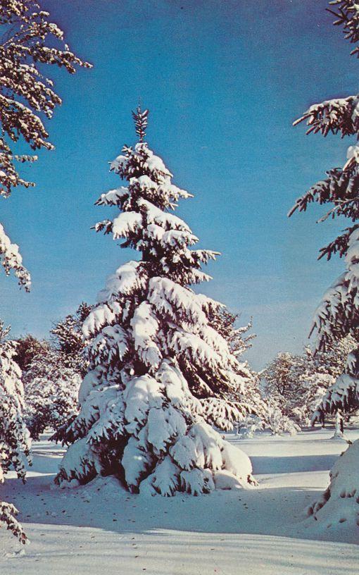 Winter in Bristol Hills, Finger Lakes Region, New York