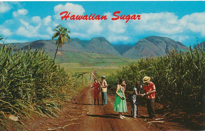 Sugar Fields of Hawaii - Chew on Sugar Cane