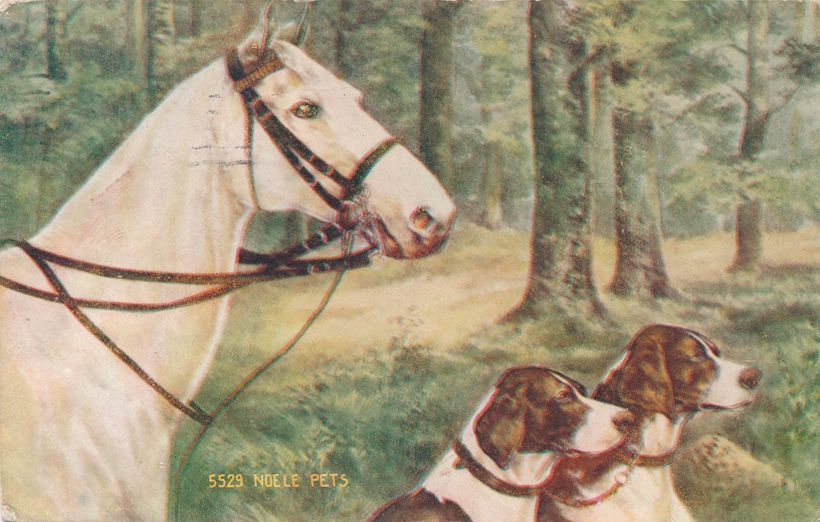 Noele Pets - Horse and Hounds ready for The Hunt - pm 1908 at Rochester NY - Divided Back