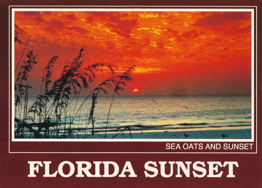 Florida - Sea Oats and Sunset - Fabulous End of Day - pm 1998 at Jacksonville FL