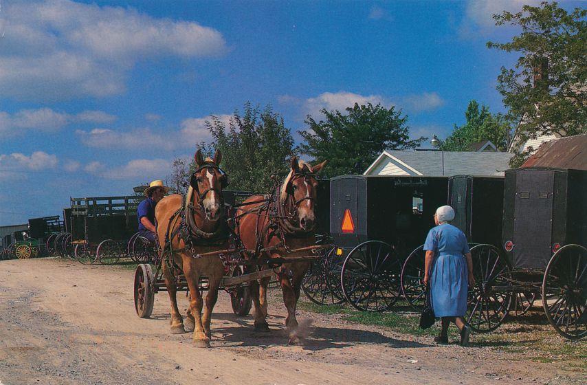 Holmes County, Ohio - Mt Hope Auction - Amish Buggy - Belgian Draft Horses - pm 1996 at Canton Ohio
