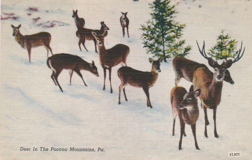 Deer in the Pocono Mountains, Pennsylvania - Linen Card