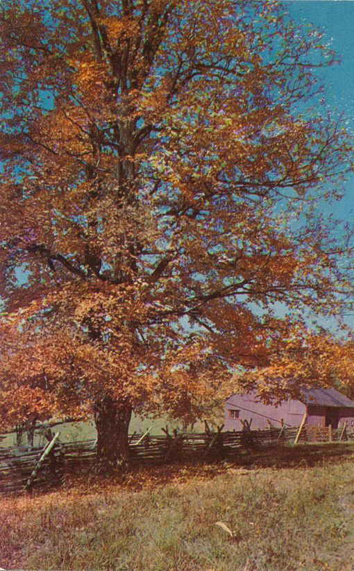 Autumn View - Somerset County, Pennsylvania - Majestic Oak Trees