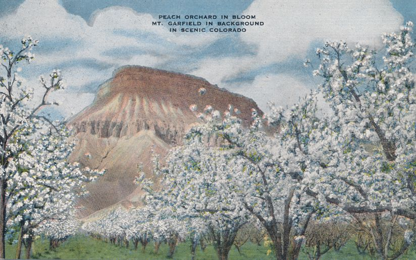 Peach Orchard in Shadow of Mt Garfield, Colorado - Linen Card