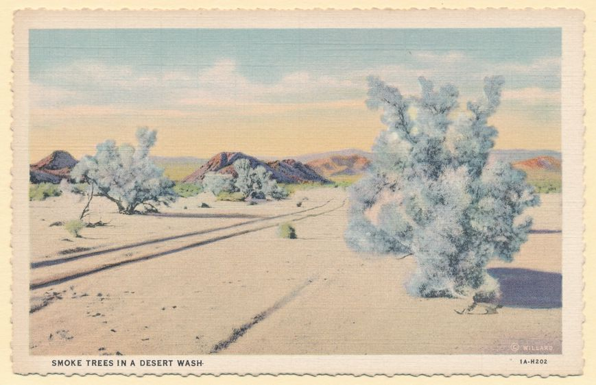 Smoke Trees in a Desert Wash - Southwest United States - Linen Card
