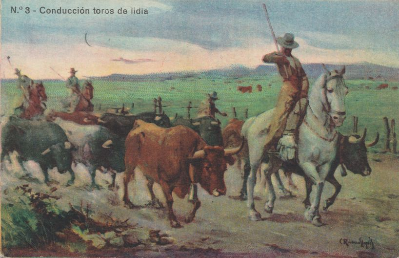 Cowboys Driving Fighting Bulls in Spain - Divided Back