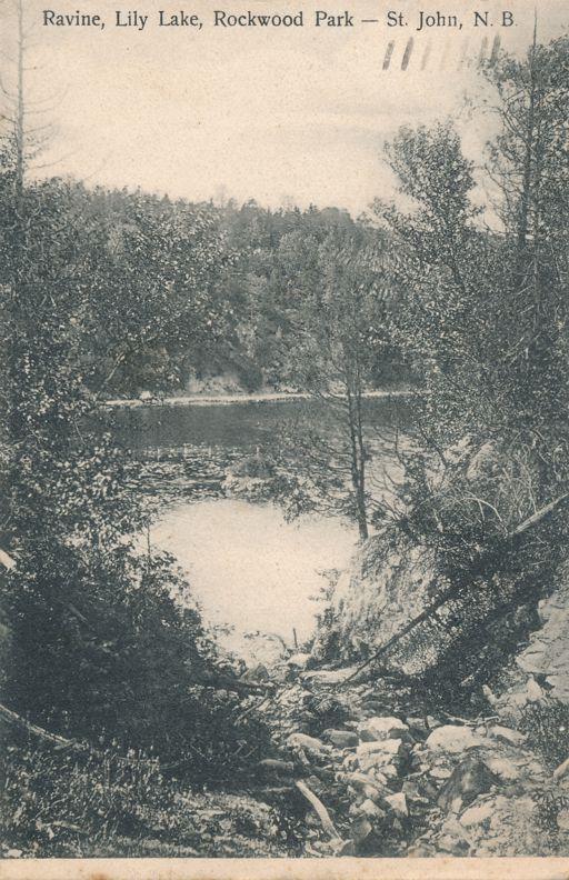 Ravine on Lily Lake in Rockwood Park - St John, New Brunswick, Canada - pm 1905 - Undivided Back