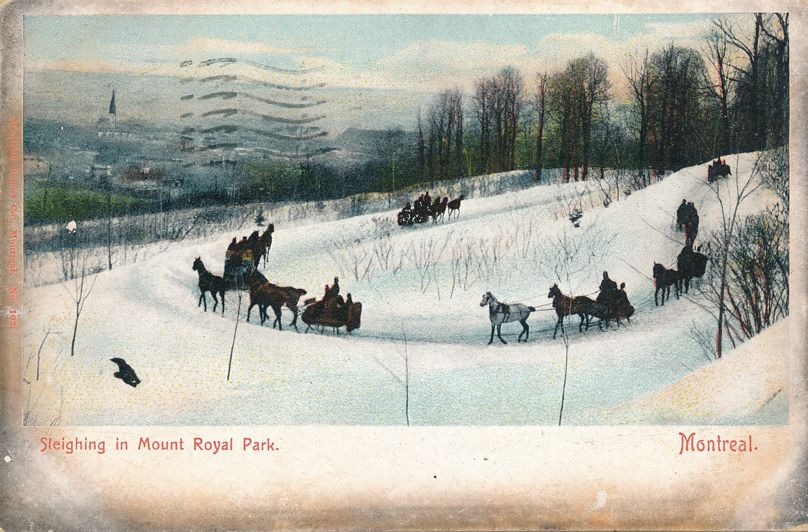 Horse Sleighing in Mount Royal Park - Montreal, Quebec, Canada - pm 1905 - Undivided Back
