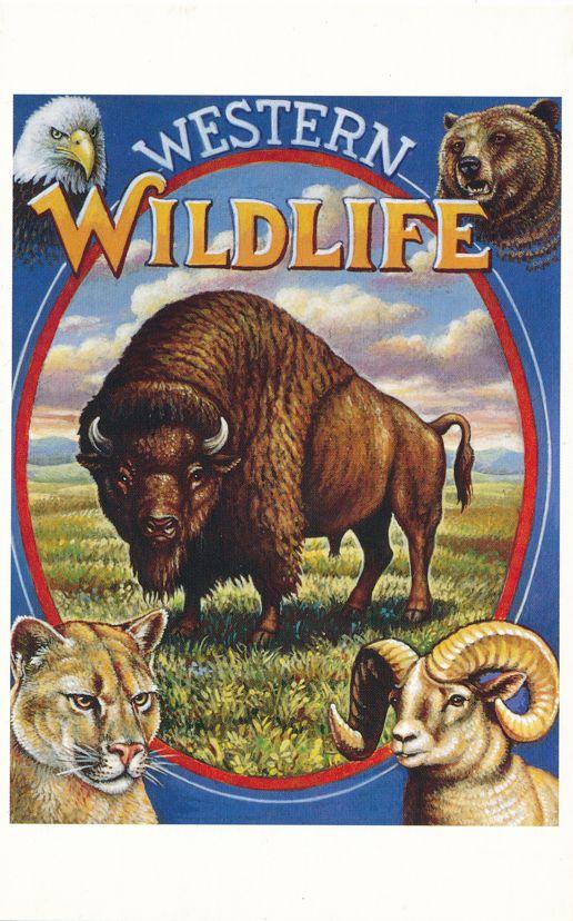 US #UX193 - FDC - October 18, 1994 Lawton OK - Wildlife Buffalo on Postal Card - pm 1994