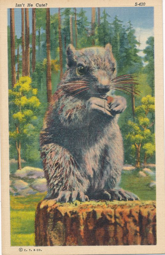 Grey Squirrel on Tree Stump - Isn't He Cute? - Animal - pm 1945 at Utica NY - Linen Card