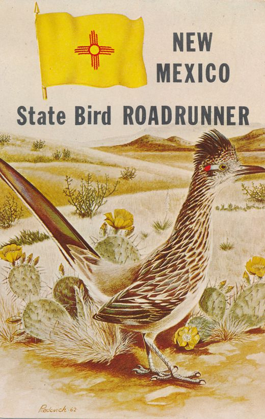 Roadrunner The State Bird of New Mexico - pm 1970 at Saint Johns AZ