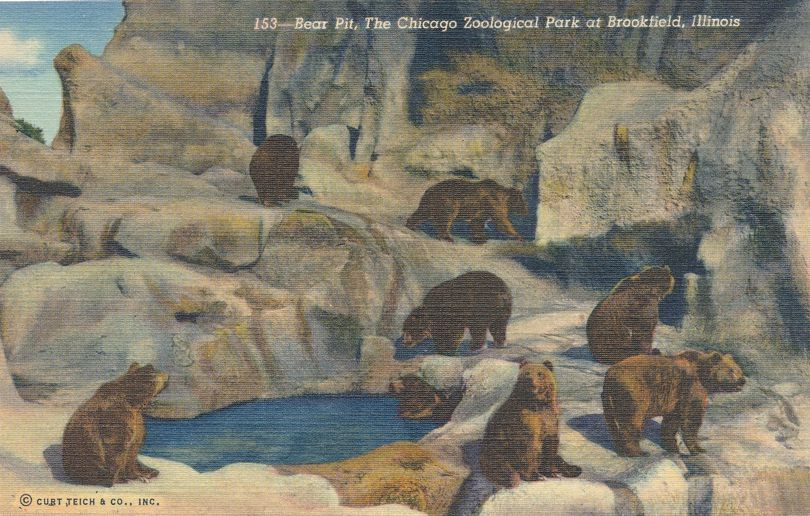 Bear Pit - Chicago Zoological Park - Zoo -Brookfield, Illinois - Linen Card