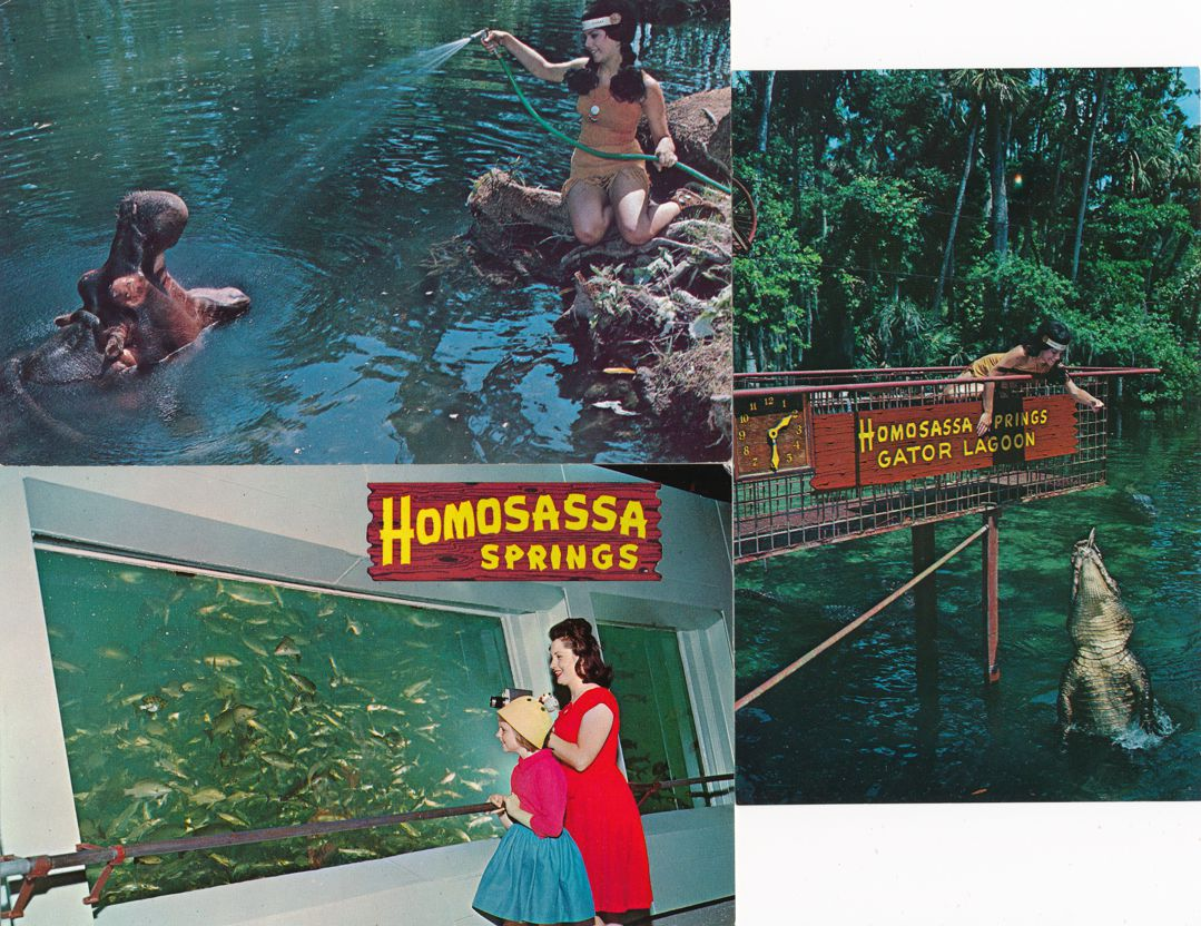 (3 cards) Homosassa Springs, Florida - Lucifer the Hippopotamus, Alligators, Fish