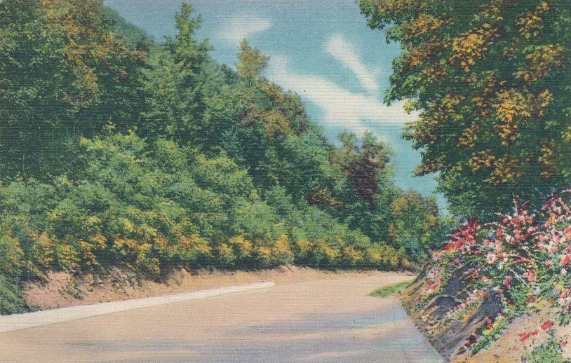 Roadway leading to Skyline Drive - Mt. Penn, Reading, Pennsylvania - pm 1939 - Linen Card