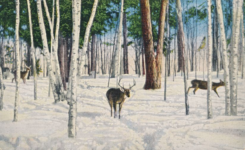 Winter View - White Tail Deer - Buck and Does - Animal - Linen Card