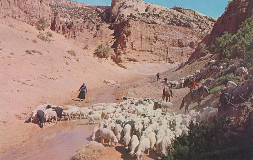 Navajo Indians and Sheep Herd - Native American Culture