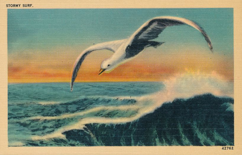 Seagull - Bird - Over Stormy Surf - Linen Card