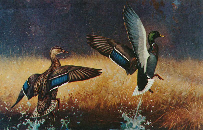 Ducks at Take Off - Birds - Artist: Lynn Bogue Hunt