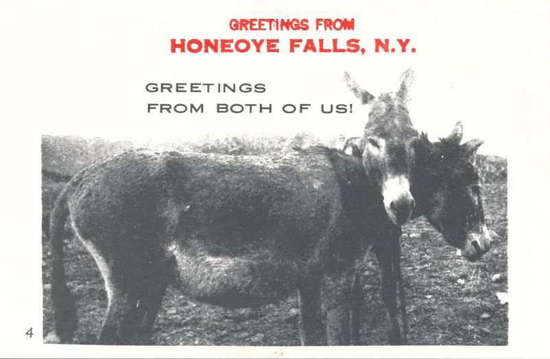Greetings from Honeoye Falls, New York - Both of us Donkeys - Village Print Humor