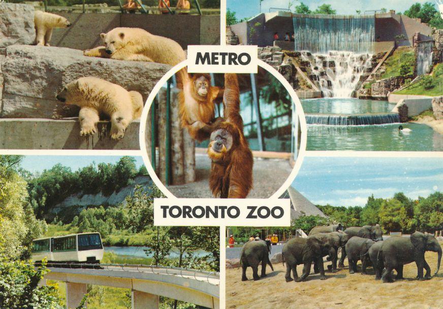 Toronto, Ontario, Canada - Metro Zoo - Polar Bears, Elephants