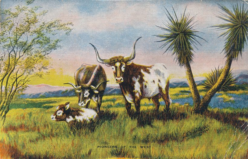 Pioneers of the West - Texas Longhorns - Artist: Dude Larsen - pm 1947 at El Paso TX - Linen Card
