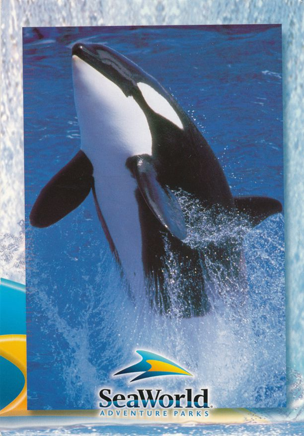 Shamu the Killer Whale at Sea World Adventure Park - pm 2003 at Houston TX