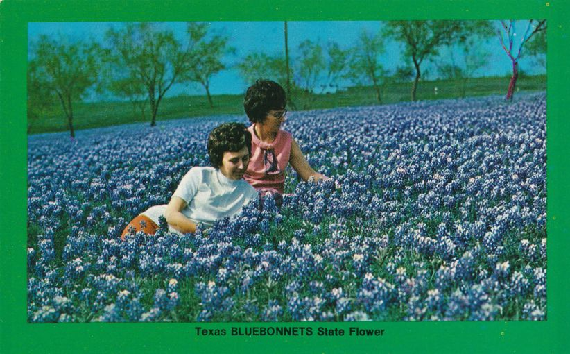 Bluebonnets in Bloom, Texas State Flower