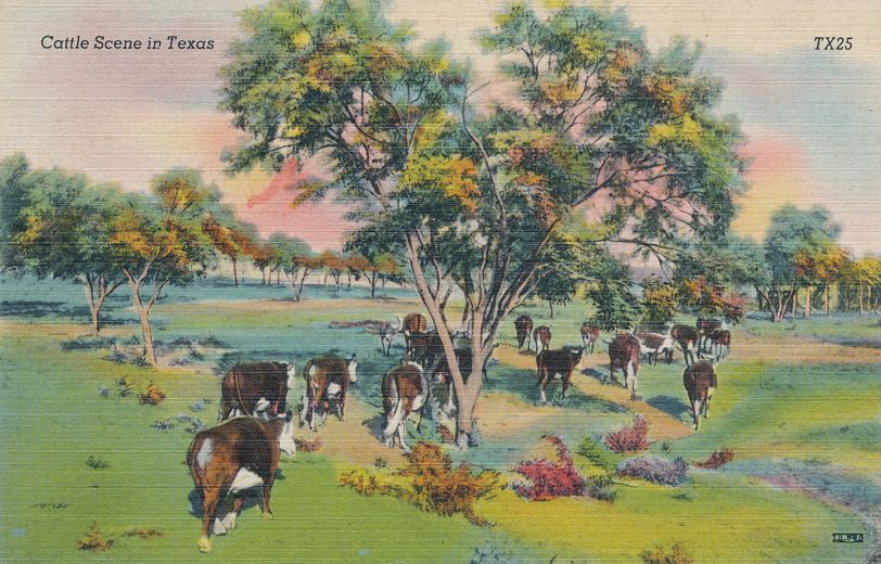 Cattle Scene in Texas - Linen Card