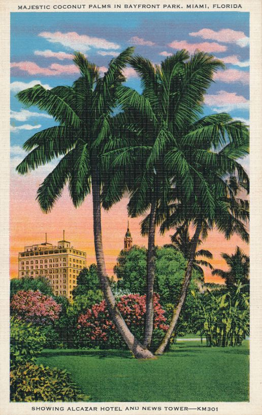 Miami, Florida - Coconut Palms in Bayfront Park - Showing Alcazar Hotel - Linen Card