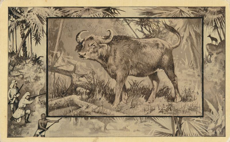 Africa Safari 1909 Series by Mintz of Chicago - African Buffalo - Divided Back