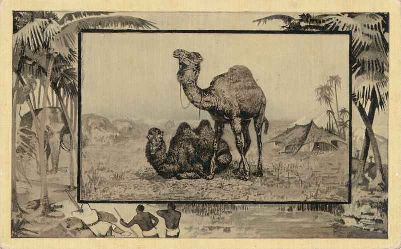 Africa Safari 1909 Series by Mintz of Chicago - Camel - Divided Back