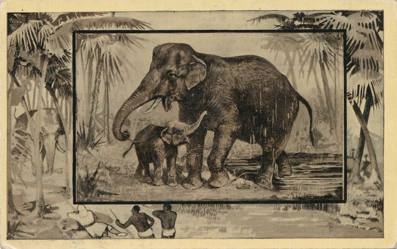 Africa Safari 1909 Series by Mintz of Chicago - Elephant and Calf - Divided Back