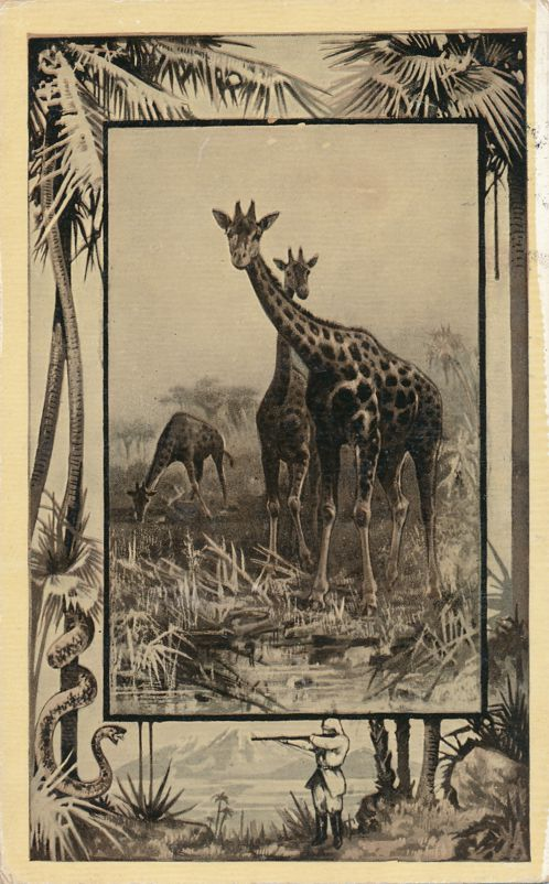Africa Safari 1909 Series by Mintz of Chicago - Giraffe - Divided Back