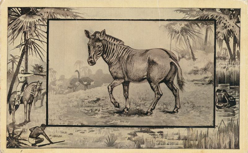 Africa Safari 1909 Series by Mintz of Chicago - Extinct Quagga (caption says Gnu) - Divided Back