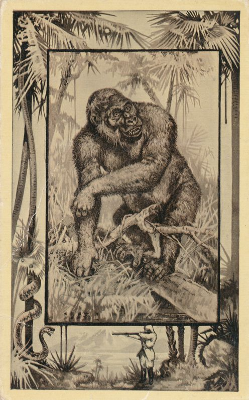 Africa Safari 1909 Series by Mintz of Chicago - Gorilla - Divided Back
