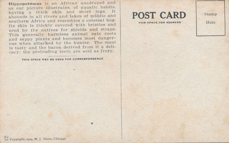 Africa Safari 1909 Series by Mintz of Chicago - Hippopotamus - Divided Back