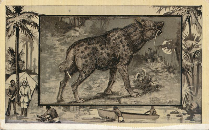 Africa Safari 1909 Series by Mintz of Chicago - Hyena - Divided Back