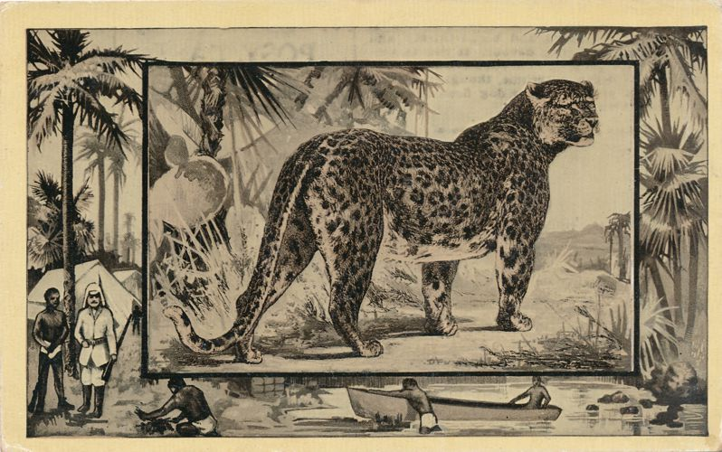 Africa Safari 1909 Series by Mintz of Chicago - Leopard - Divided Back