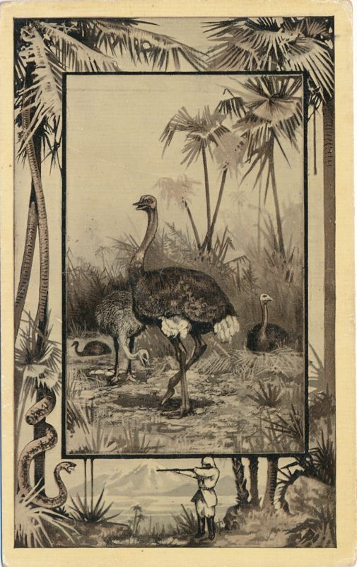 Africa Safari 1909 Series by Mintz of Chicago - Bird Ostrich - Divided Back