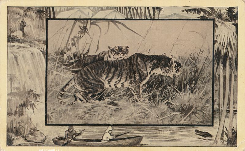 Africa Safari 1909 Series by Mintz of Chicago - Tiger - Divided Back