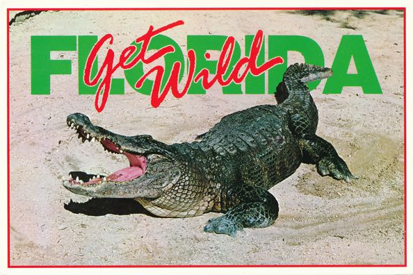Greetings - Get Wild in Florida with Albert the Aligator - pm 1994 at Daytona Beach FL