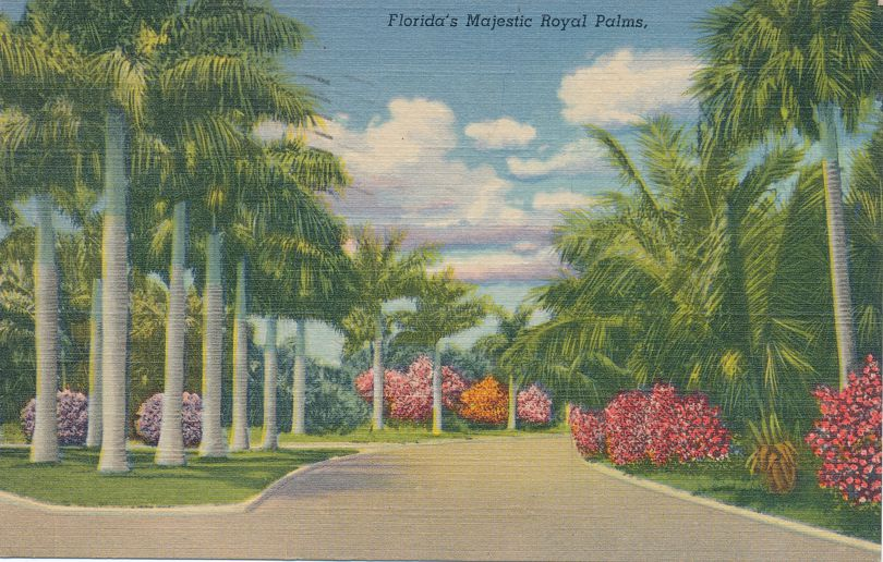 Majestic Royal Palms on typical Florida Street - pm 1947 at Clearwater FL - Linen Card