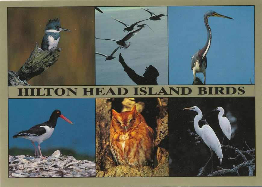 Hilton Head Island, South Carolina - Birds - Kingfisher Heron Owl Egret