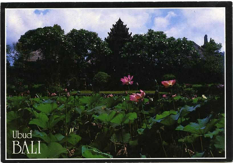 Bali, Indonesia - Beautiful Water Lily Pond at Pura Saraswati Ubud - Bintang Star of all Beer