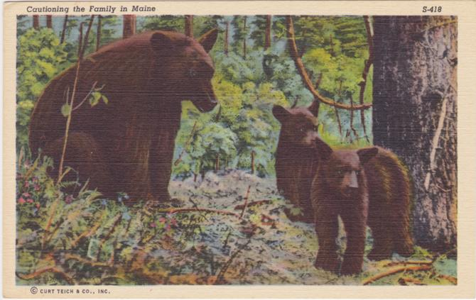 Cautioning the Bear Family in Maine - Linen Card