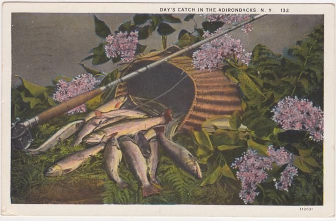 Day's Fish Catch in the Adirondacks, New York - pm 1931 - White Border
