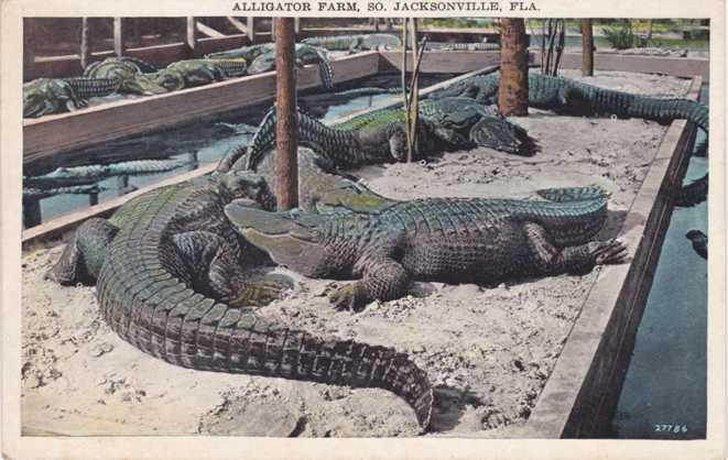 Alligator Farm at South Jacksonville, Florida - White Border