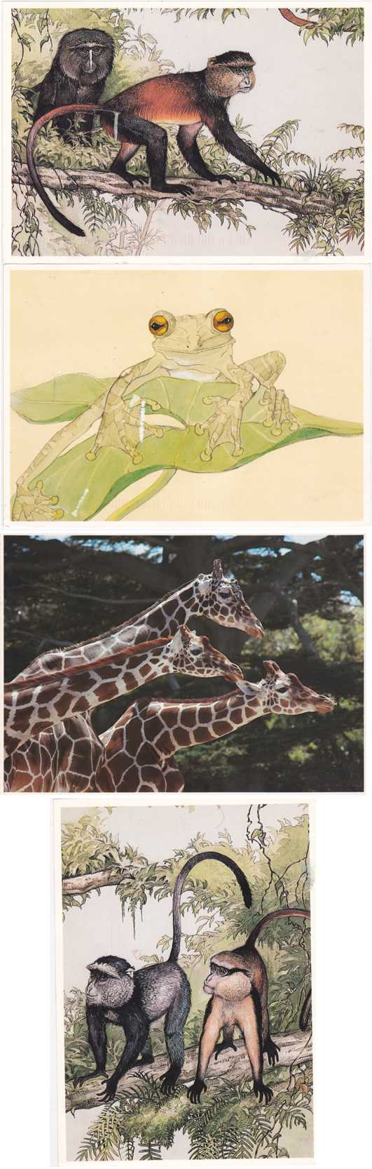 (4 cards) Exotic Wildlife Monkeys Giraffes Frog - Paintings and Photo