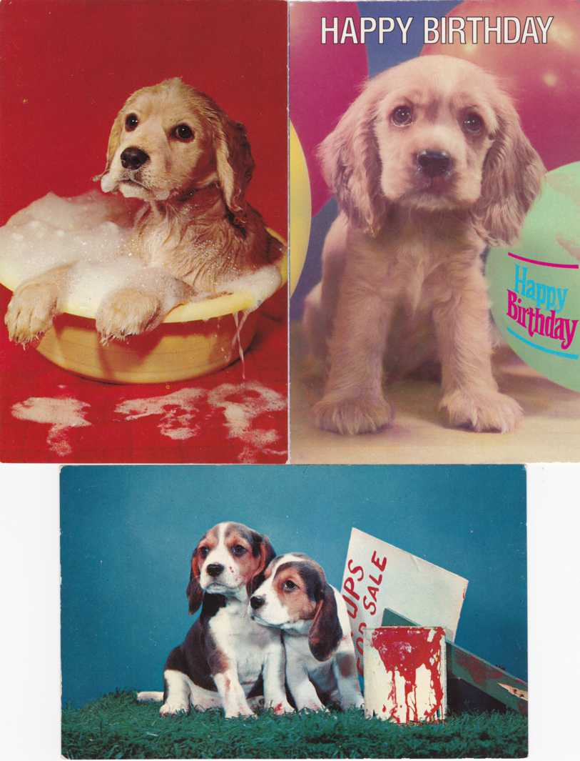(3 cards) Cute Puppies - Dogs
