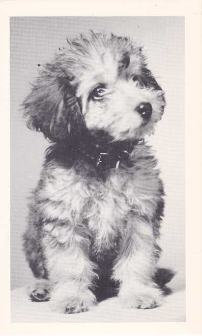 Cute Puppy - Kline's Creation of Jefferson, Ohio